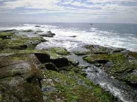 Woody Head Rock Ledges - Barnacle Bob