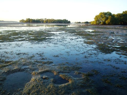 The terrain around the old oyster jetty at low tide - Bribie Island