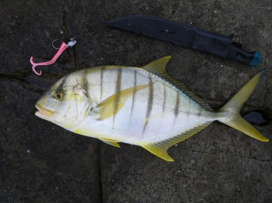 Another Golden Trevally