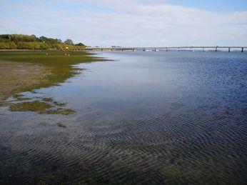 Seasonal sea grass beds are starting to grow