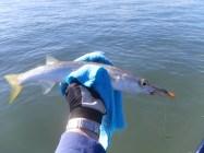 The Pike got bigger and bigger