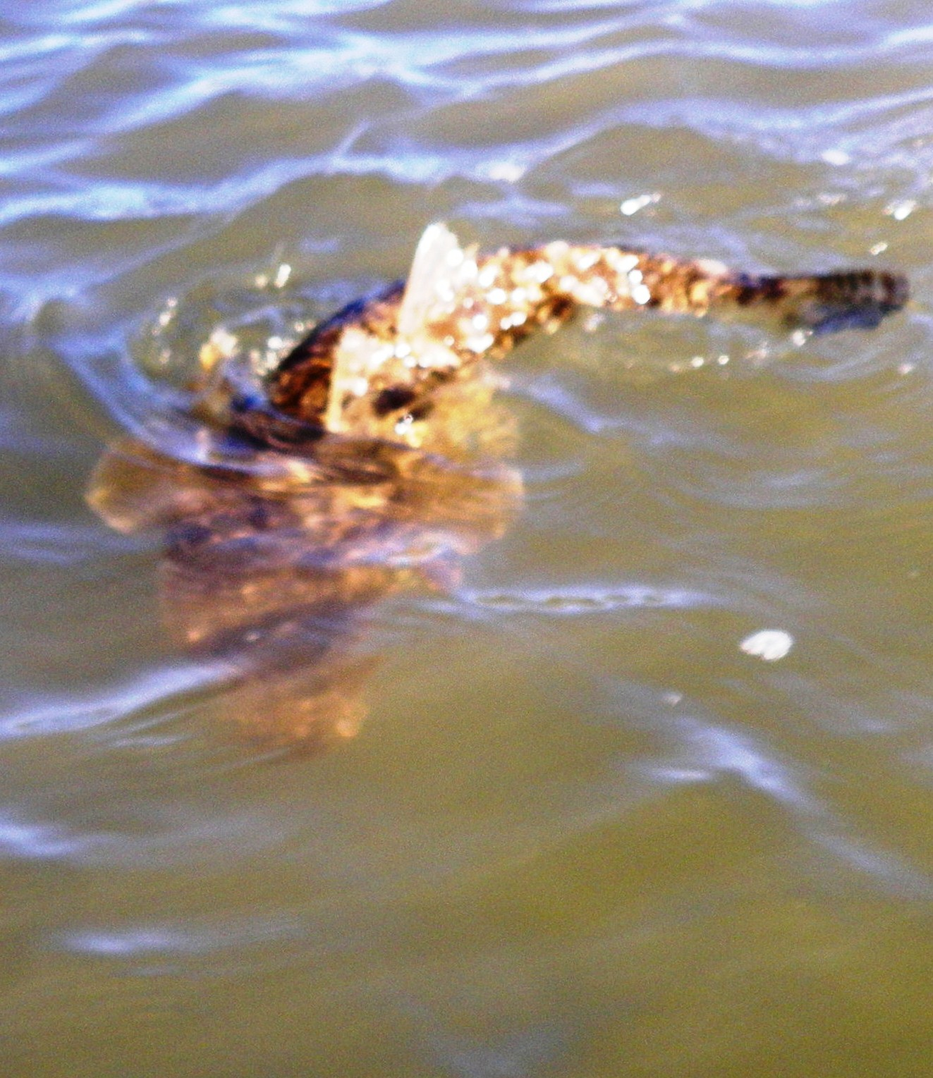Best fish of the day a 58cm flathead landangler 39 s blog for Best day to fish