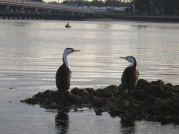 Fishing spectators