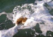 An unhappy fish - Wreck Rock