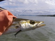 Pike like GULP Swimmows