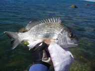 It was good to get a reasonable size Bream