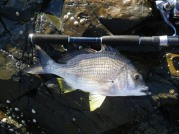 These Bream were hungry