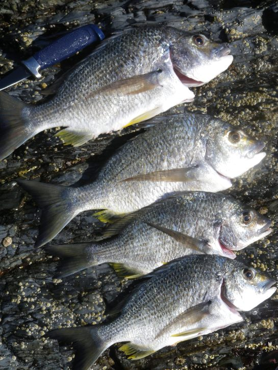 Four quality Bream for dinner