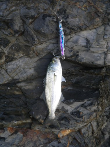 Lures size or type did not worry them