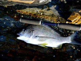 The Catana is a great rod for this type of fishing