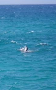 Flipper - showing off