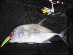 The Trevally just whacked the RAPALA SXR14