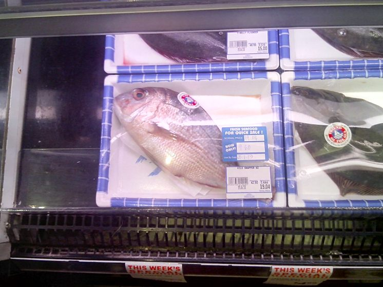 How does and undersize NZ snapper end up here