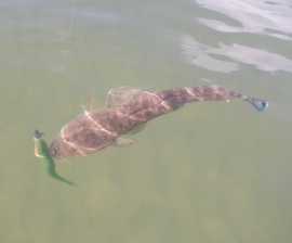 Just one 30cm Flathead for 3 hours of fishing