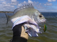 DUO Ryuki Spearhead catches a small bream