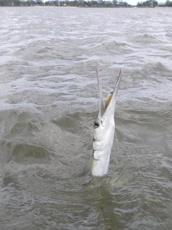 Long Tom - like a mini marlin