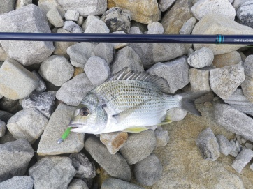 Plenty of small bream on the river side