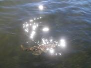 Plenty of fish and plenty of sunshine