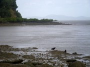 Corio Bay - nice weather for ducks