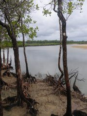 Difficult to cast amongst the mangroves