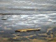 Rain - silt - mud - and a flathead