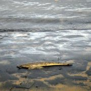 Rain - silt - mud - and a flathead