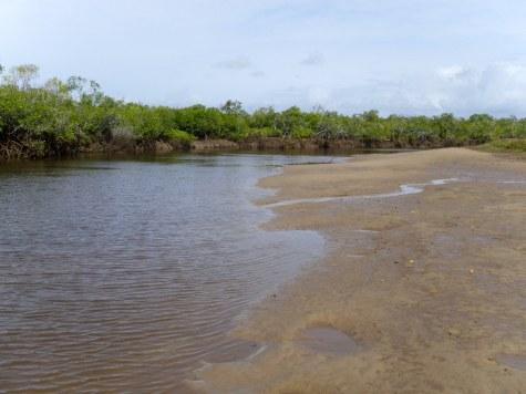 I walked towards the main estuary and the creek gradually widened out