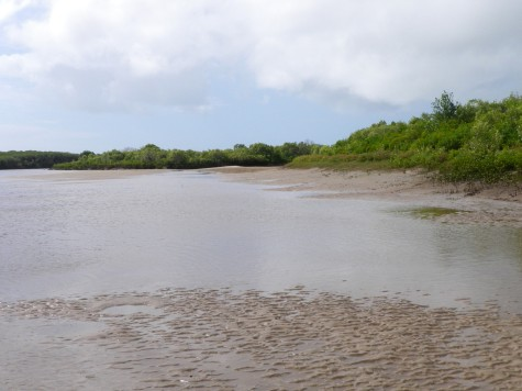 The tide ran out revealing sandy ledges and mangrove roots