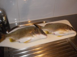 A couple of plump Bream