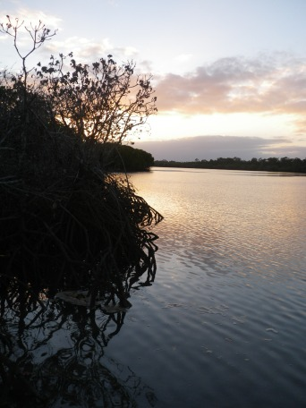 Baffle Creek - Flat Rock - Mangroves