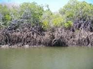 Fishy habitat