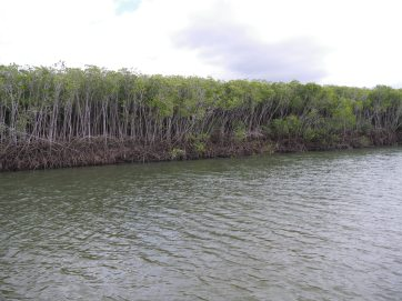 Mangrove roots - fish zone