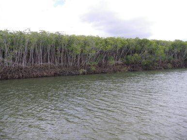 Mangrove roots - fish zone