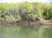The trevally was cruising along here