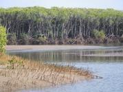 Very fishy landscape