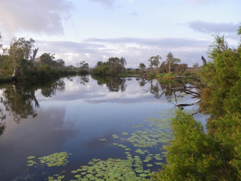 Hedlow Creek - ideal freshwater barramundi habitat