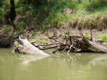 This snag near Rileys Crossing - was catfish central