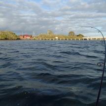 Nice rod bend - fish everywhere