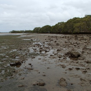 South of the bridge - low tide