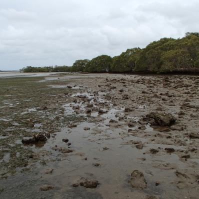 South of the bridge - low tide