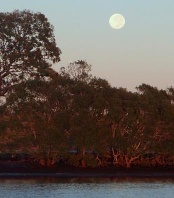 Massive morning moon