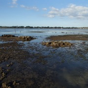 Bribie oysters