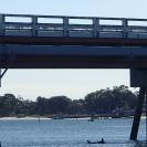 Bridge Dolphins