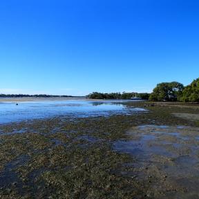 Flats at low tide