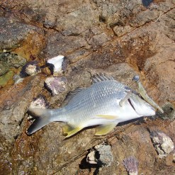 It started with a couple of small bream