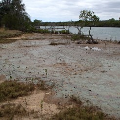 Sickly smell of green algal bloom