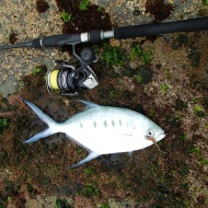 Dart on soft plastic lure