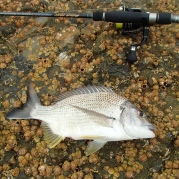 More bream