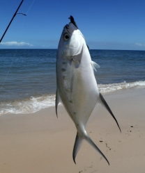 Blue skies and a few fish - Bribie