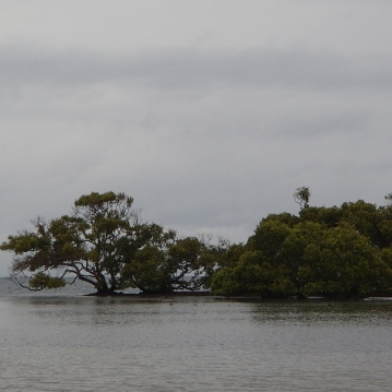 A grey morning on the Bribie flats